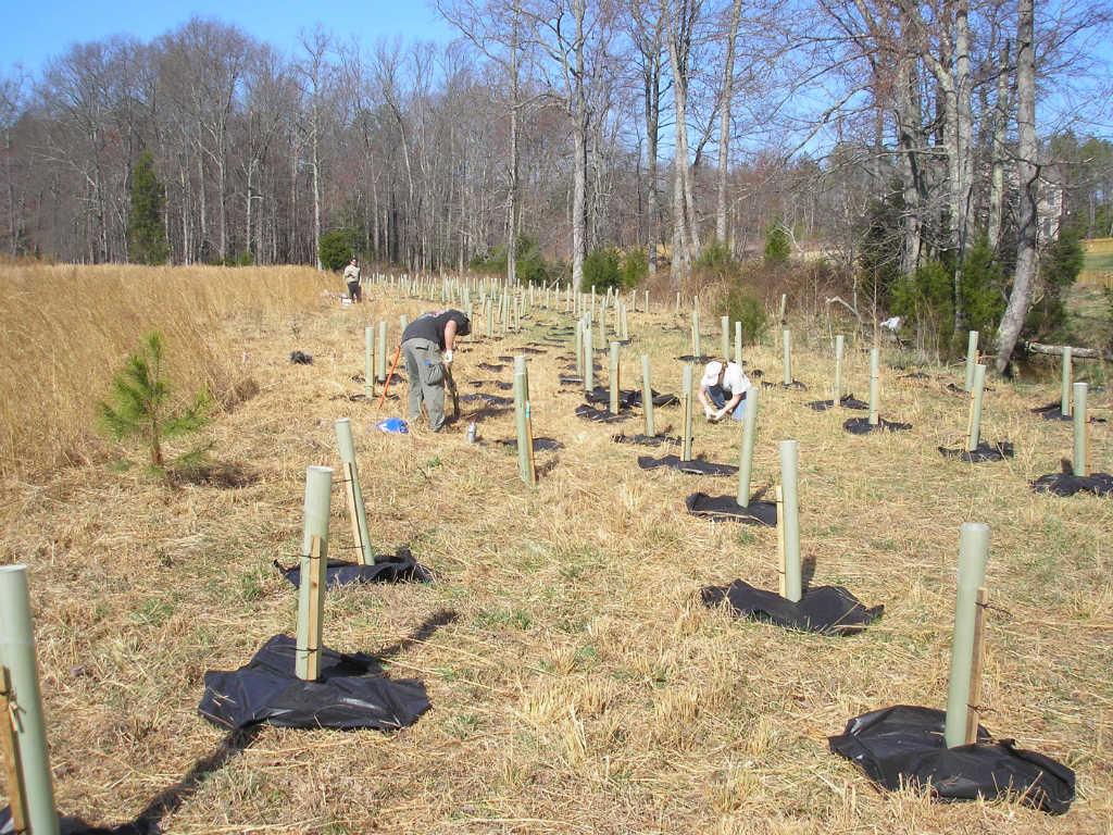 Riparian Buffer Planting What Good Riparian Buffers